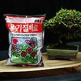 유기질 원예용 비료|Myrtillocactus geometrizans cv. fukurokuryuzinboku