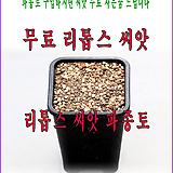 리톱스 씨앗 파종토