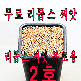 리톱스 씨앗 복토용 2호|Lithops