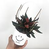 에덴로소 / 스마일바구니세트 / 화이트 /공기정화식물|