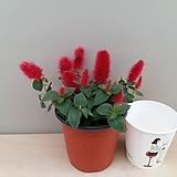 붉은여우꼬리풀(미니소품)|