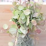 틸란드시아(공기정화식물)|Tillandsia
