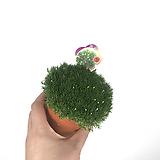 모스 /향모스 / 초록 / 월동가능 / 꽃핍니다|
