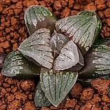 화이트에메랄드(White Emerald)-04-07-No.4132 