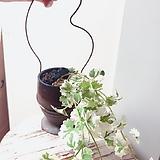 쑥향(잎의 무늬가 다양하여 멋스러우며 늘어지는 수형)행잉 옹기수제분 완성분세트/분갈이/마사/화산석 Handmade Flower pot