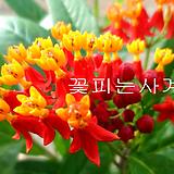 금관화(꽃대소품)|