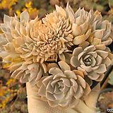 양로철화(중품)00|Echeveria peacockii subsessilis