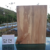 박쥐란 헌팅트로피용(통나무슬라이스)xp4208 