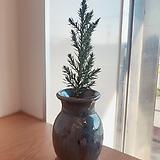 편백나무  수제분완성분(블루빛의 푸르고 작은 편백나무)분갈이/마사/화산석포함 Handmade Flower pot