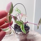 오색달개비 미니행잉수제분 완성분(아름다운색감의 달개비와 귀여운 행잉분이 너무 예쁜)분갈이/마사/화산석 Handmade Flower pot