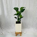 공기정화식물 극락조 중형완성화분|