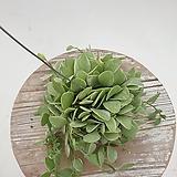 화이트그린디시디아 행잉플랜트 공중식물 공기정화식물|