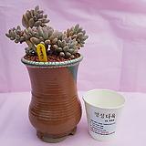 수제화분 06-013 (재경공방 롱분)|Handmade Flower pot