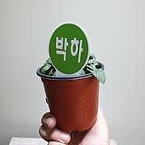 박하허브소품10202512|Hub
