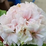 순드본(화분포함)|