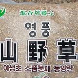 오팔문목대(대) 1006-671