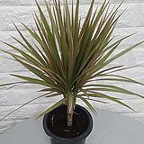 마지나타 공기정화식물|
