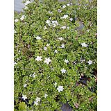 단정화 포트 실내화초 야생화 공기정화식물|