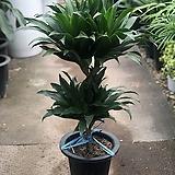 콤펙타 공기정화식물|
