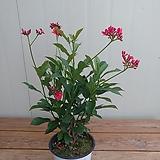 마타피아 꽃대가득|
