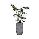 몬스테라 회색원형완성분 축하화분 인테리어화분 거실식물|