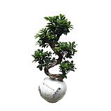 가지마루백자항아리(대) 축하화분 인테리어화분 사무실식물|