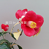 유원동백(외목분재수형/2)-동일품배송 