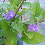 자스민 꽃 사계절피는꽃|