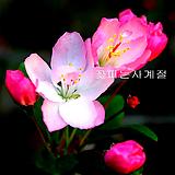 수사해당(분재작품/A)-동일품배송 