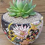 대품 사과마리아|Echeveria agavoides Maria