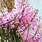 세이란페다니움.꽃피었던상품.예쁜꽃.아주좋은향.인테리어효과.상태굿.인기상품.|