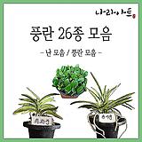 난 모음/난/석곡/풍란/식물/화분/농장/난농장/나라아트|