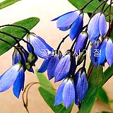 소리아 (꽃대소품)|