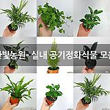 한빛농원- 실내 공기정화식물 모음|