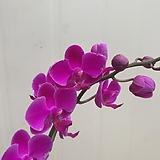 만천홍 쌍대|