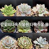 바람꽃의다육식물원 다육식물 모음|