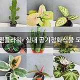 실내 공기정화식물 모음 (이진플라워)|