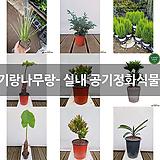 실내 공기정화식물 모음 (도자기랑나무랑)|