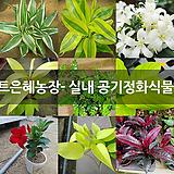 실내 공기정화식물 모음 (꽃마트은혜농장)|