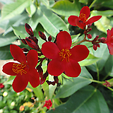 빠따삐아-멋진외목년중꽃|