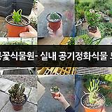 공룡꽃식물원- 실내 공기정화식물 모음|