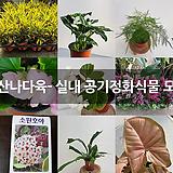 호산나다육- 실내 공기정화식물 모음|