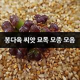 봉다육 씨앗 묘목 모종 모음|