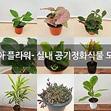 진아 플라워- 실내 공기정화식물 모음 