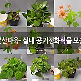 문산다육- 실내 공기정화식물 모음|