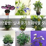 예향꽃방- 실내 공기정화식물 모음 