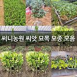 써니농원 씨앗 묘목 모종 모음 