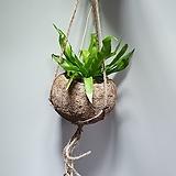 코코다마공중식물3종세트 405011960 