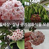 꽃세상- 실내 공기정화식물 모음 