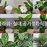 모두플라워- 실내 공기정화식물 모음|